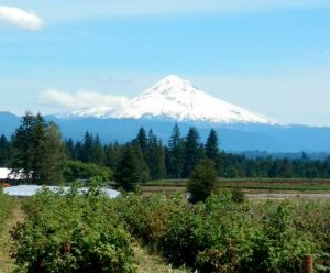 View from the Cedars in Clackamas with Mt. Hood peak above evergreen forests